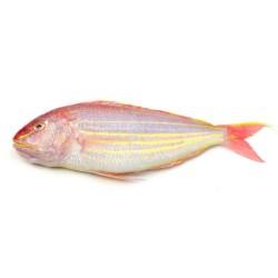 Ikan Kerisi
